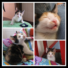 Rupia - Adoptada pela Teresa! (Julho de 2009)