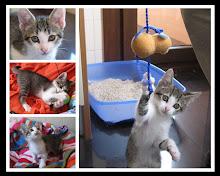 Libra - Adoptado pelo Tiago e família!(Junho 2009)