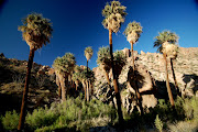 The Lost Palm Oasis: