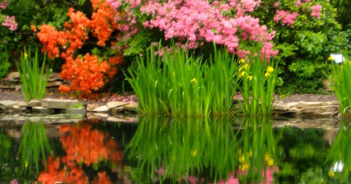 Cheesehead Gardening: Foxfire Botanical Gardens Marshfield, WI