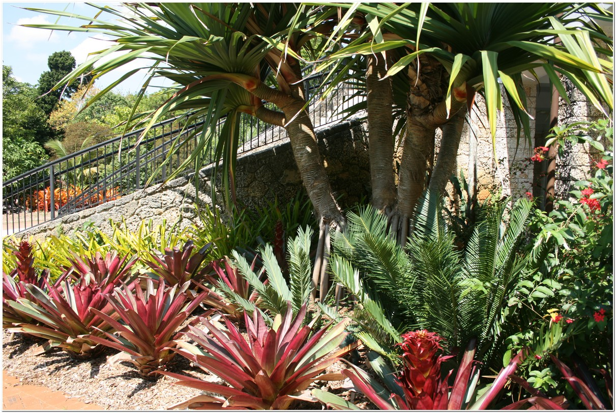 Southeast Florida Garden Evolvement Fairchild Tropical