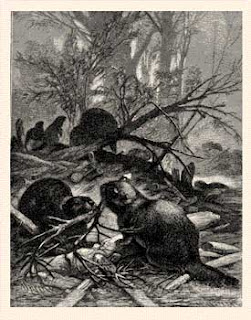 1880's wood engraving by Specht and Kellenbach