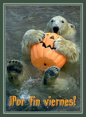 Polar bear celeberating Halloween