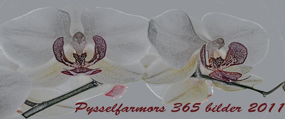 Pysselfarmors 365 bilder 2011