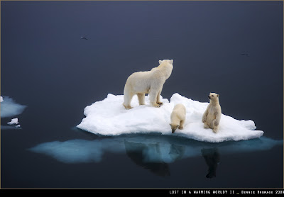 polar bears and global warming What particularly interests me about crockford's report are the extraordinary similarities it shows between global warming alarmism and polar bear alarmism.