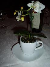 Tazzina-orchidea.