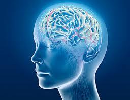 Otak bekerja dengan optimal