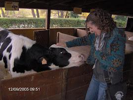 Pon una vaca en tu vida