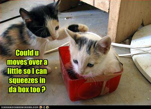 funny-pictures-kittens-share-box.jpg