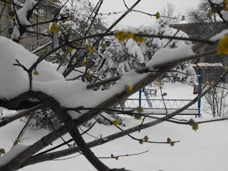 dren-snow-11