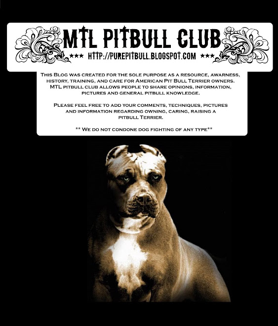 MTL Pitbull club