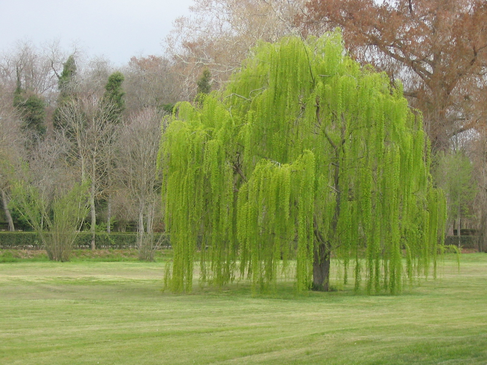 Mi arbol mon arbre - Arboles jardin ...