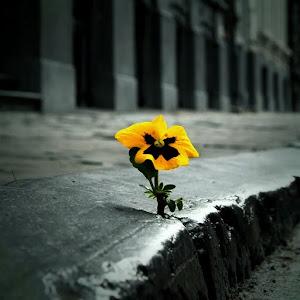 Porque la vida brotará de los escombros y se abrirá paso