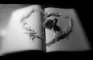 Foto coração de pétalas d flor sobre livro