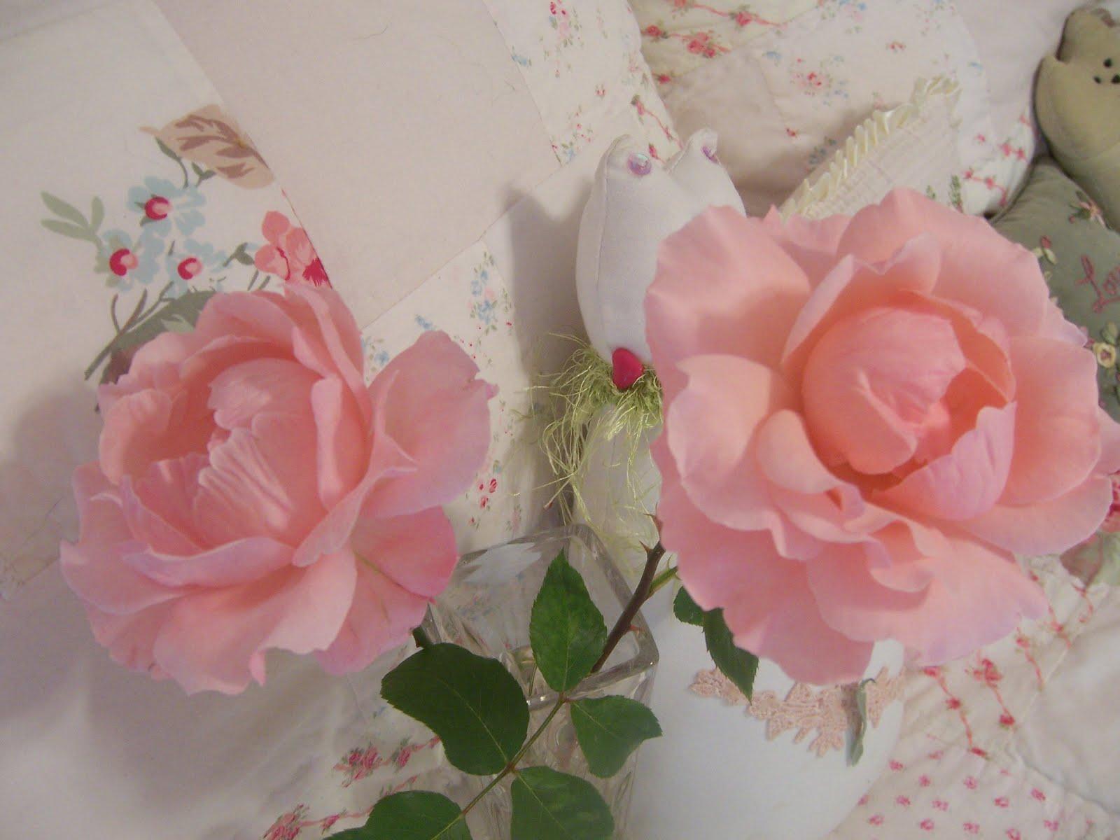 outer limits queen elizabeth rose. Black Bedroom Furniture Sets. Home Design Ideas