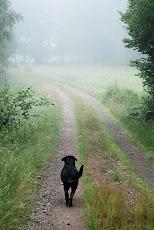 På promenad en tidig morgon...