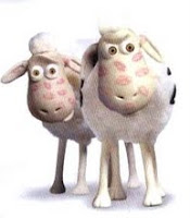 Foto Kambing Lucu tips CARA Memilih Hewan Kurban CIRI Tanda SEHAT Hewan Kurban Atau QURBAN idul adha 2009 gambar kambing