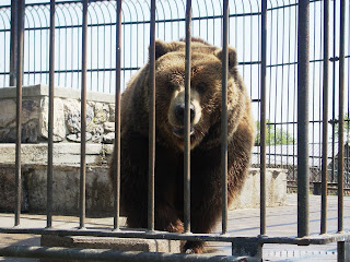 mr bearwe actually dont need to go to a zoo to see these we can stay in our house and watch the bears on picatinny