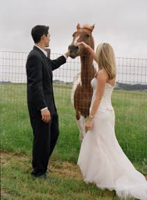 [weddinghorse]