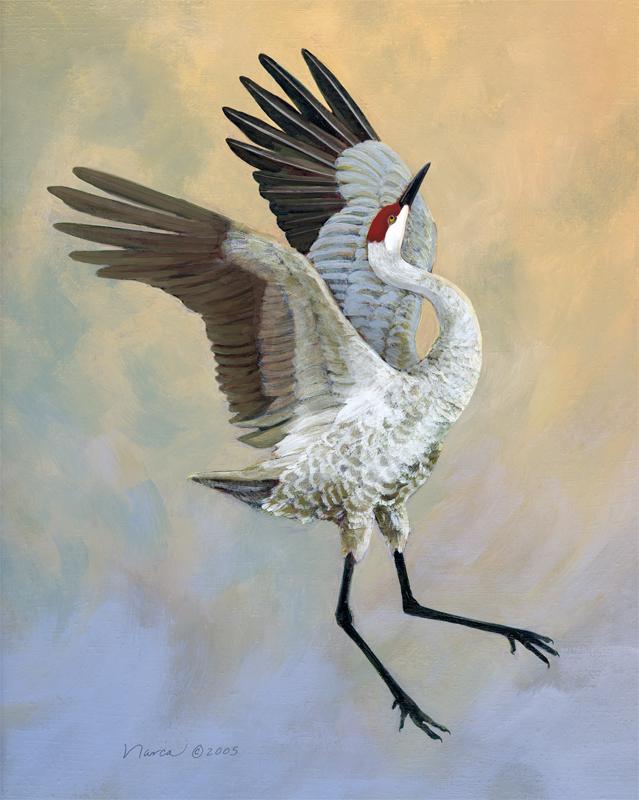 Sandhill crane art