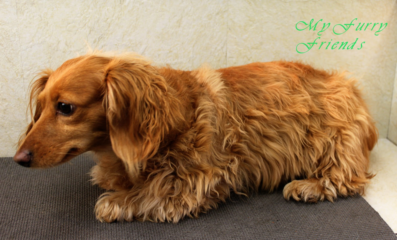 How Long Is A Dog Grooming Course