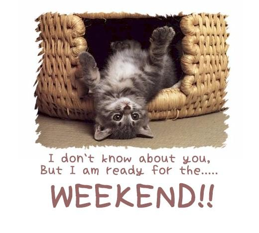 Cat Have a great weekend