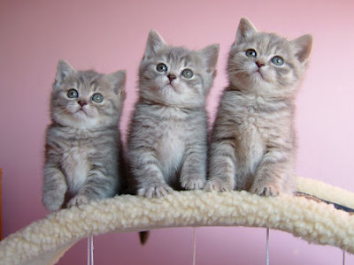 Cute cats and little kittens The three cats