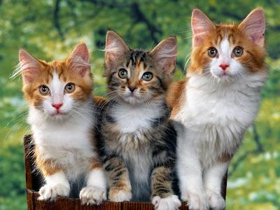 Curious cat- funny cat