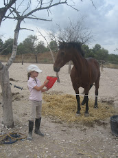 El caballo curioso