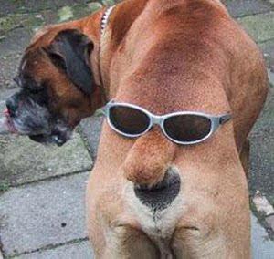 imagenes muy chistosas de animales - Imagenes Chistosas con frases para reirse mucho jaja