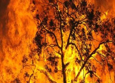 [VictorianBushfiresScreengrab]