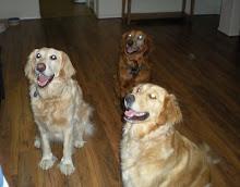 Jasper, Indy and Emma