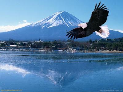 http://3.bp.blogspot.com/_9jTuUUII7qY/TCRd1Z8fY7I/AAAAAAAAA6E/pX7fTA0xUew/s1600/flying-eagle-1.jpeg
