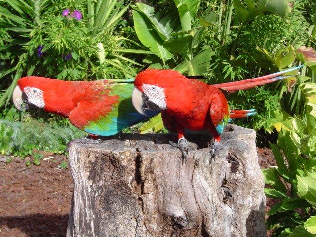 fotos que tirei na minha ultima visita ao zoo de lisboa...
