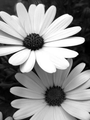 black and white flowers. lack and white flowers