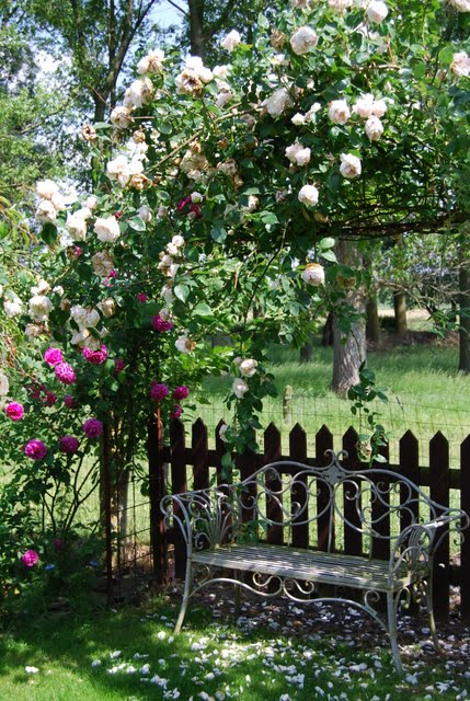 Mon jardin mes merveilles petit tour du propri taire - Petit jardin culinary arts tours ...