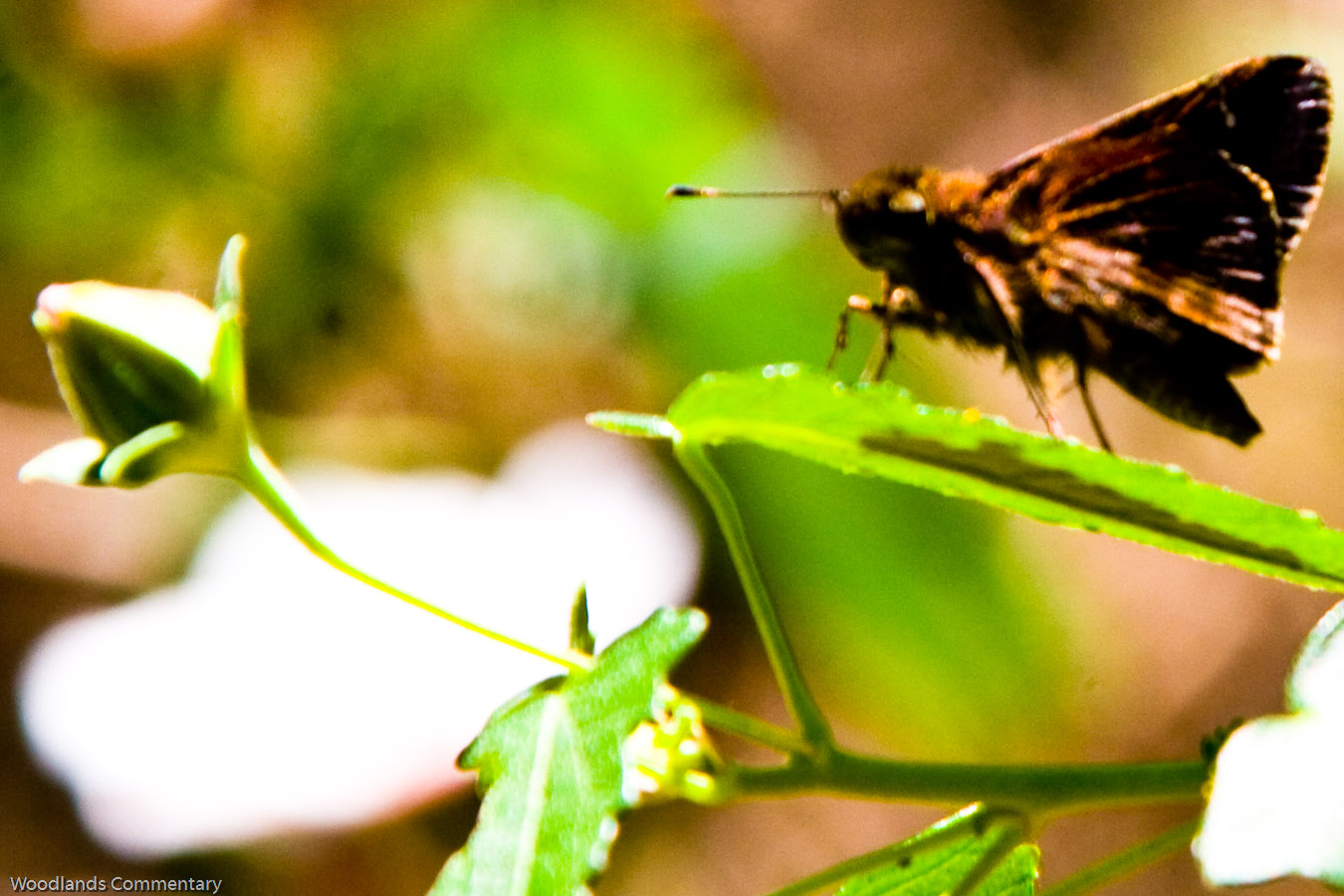 Montco%2BButterfly%2Bcount%2B2010 3431 If you live in the northern part of Austin,Texas or even elsewhere,the ...