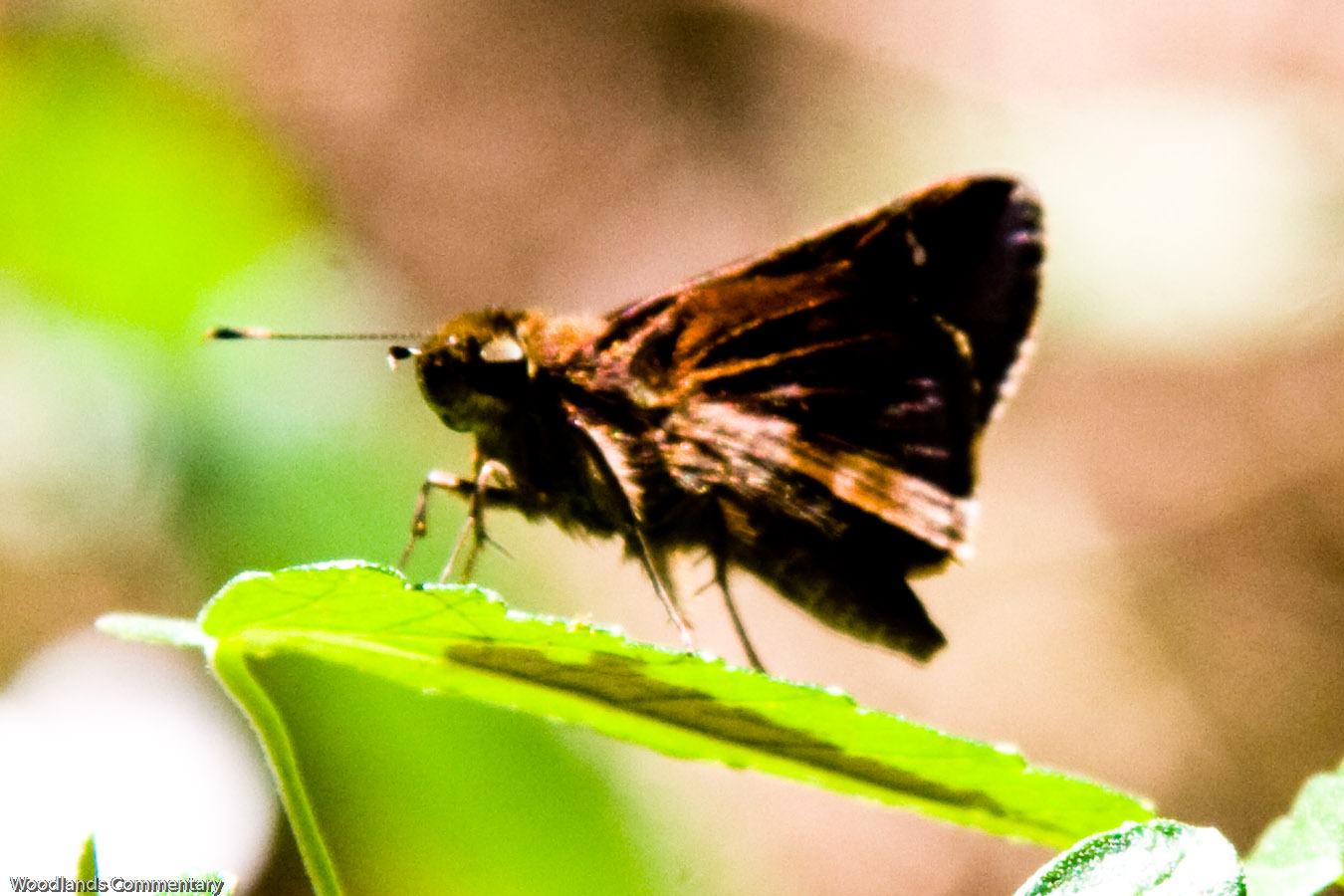 Montco%2BButterfly%2Bcount%2B2010 3430 If you live in the northern part of Austin,Texas or even elsewhere,the ...