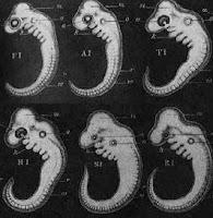 Fraude dos embriões de Haeckel