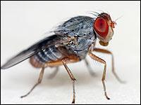 Mosca fly