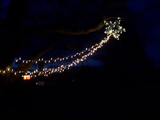 Stringing Christmas Lights In Trees