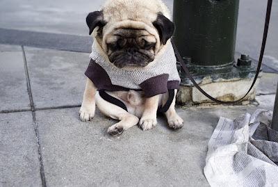 Very sad dog