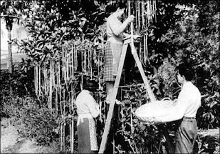 La cosecha suiza de espaguetis (1957)
