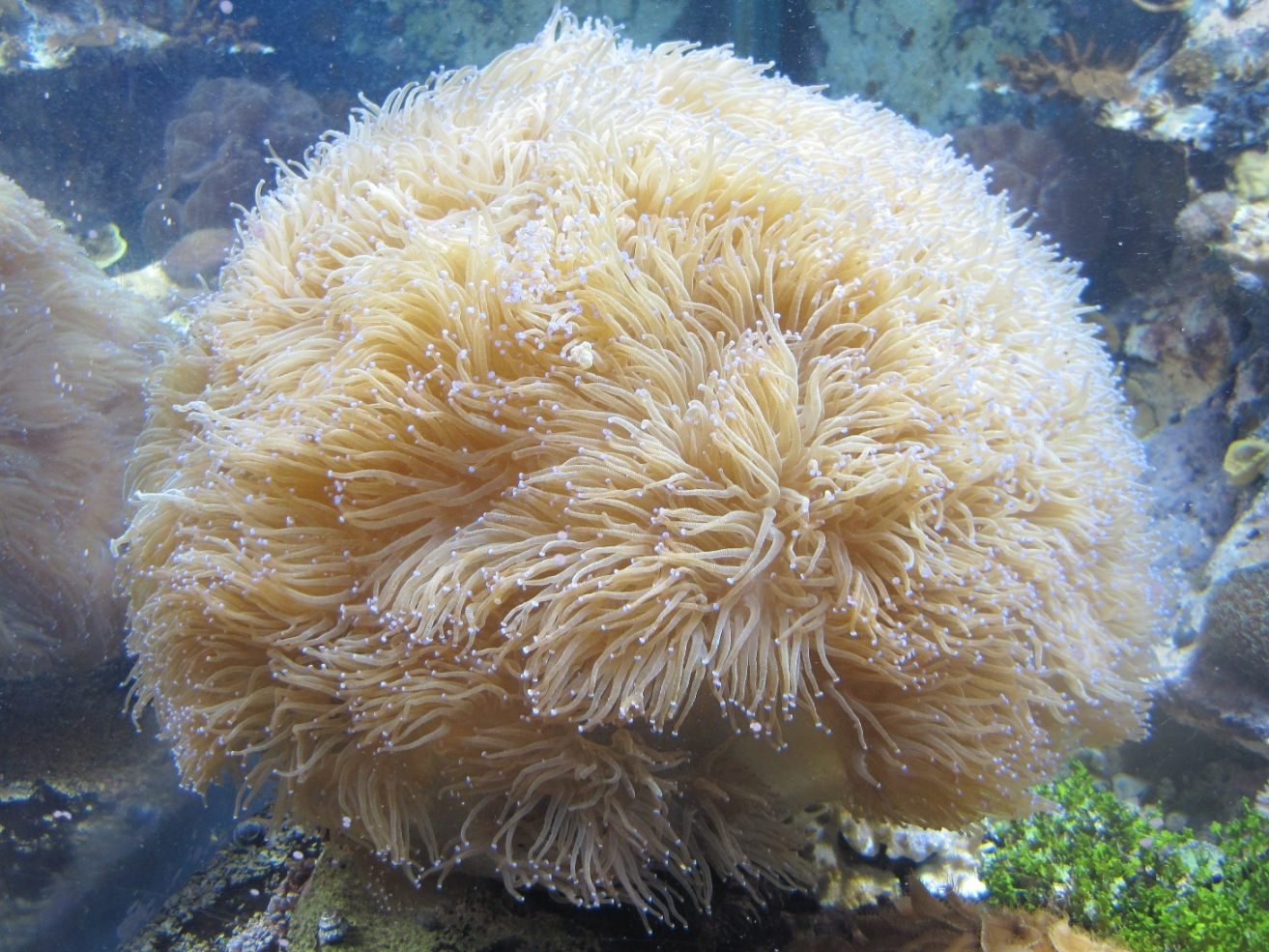 Tropical ocean animals and plants - photo#26