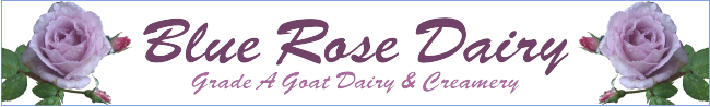 Blue Rose Dairy
