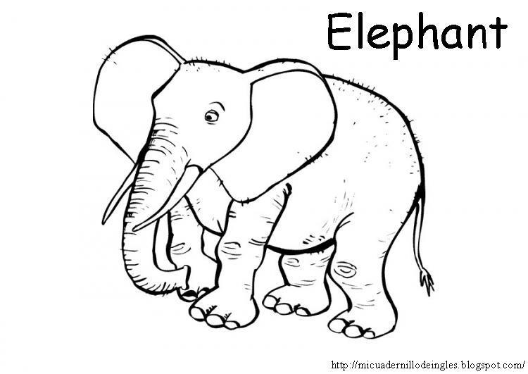 Mi cuadernillo de inglés: Animales salvajes para colorear