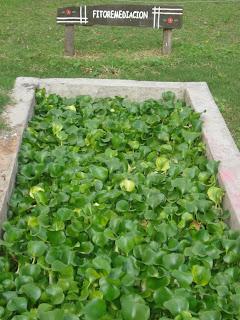 La casa ecologica autosuficiente estanque de fitorremediaci n for Estanque pileta