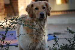 My Dog : Tucker