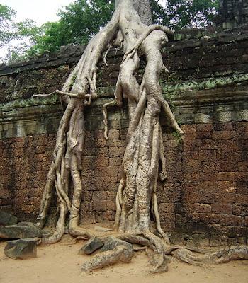 http://3.bp.blogspot.com/_9uZT4Lt5cTQ/StEUi2AgjfI/AAAAAAAACe0/SltxkiySJ3Y/s400/Angkor009.jpg