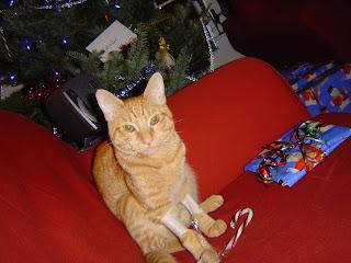 aww, meowwy christmas!!